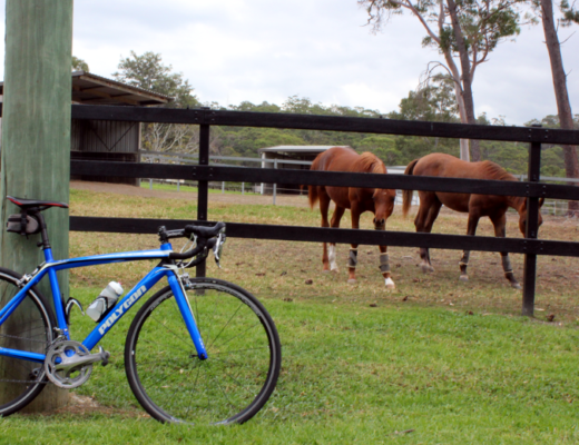 2 horses with a bicycle when cycling Berowra Waters West.