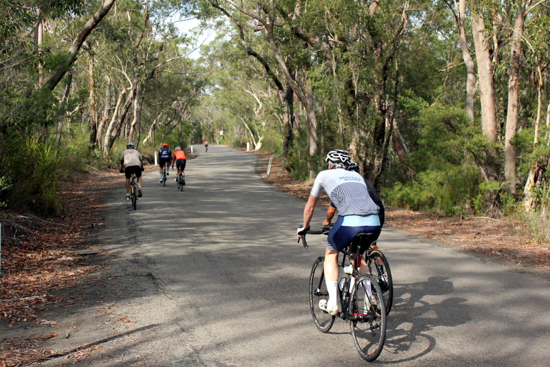Cyclists ascending a tunnel of trees when cycling Bobbin Head East.