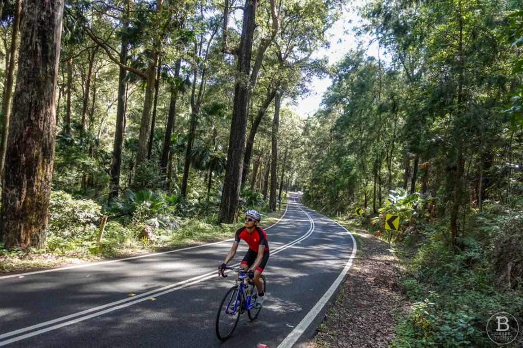 Cyclist in the forest at the base of the Waterfall Hill climb in Royal National Park